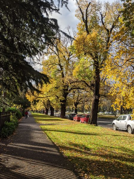 A picture of a tree-lined street, with a pathway dividing evergreen trees on the left, and orange coloured trees on the right
