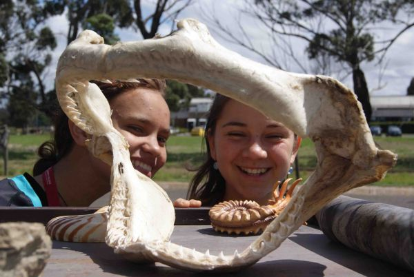Two students examining a portion of a shark skull