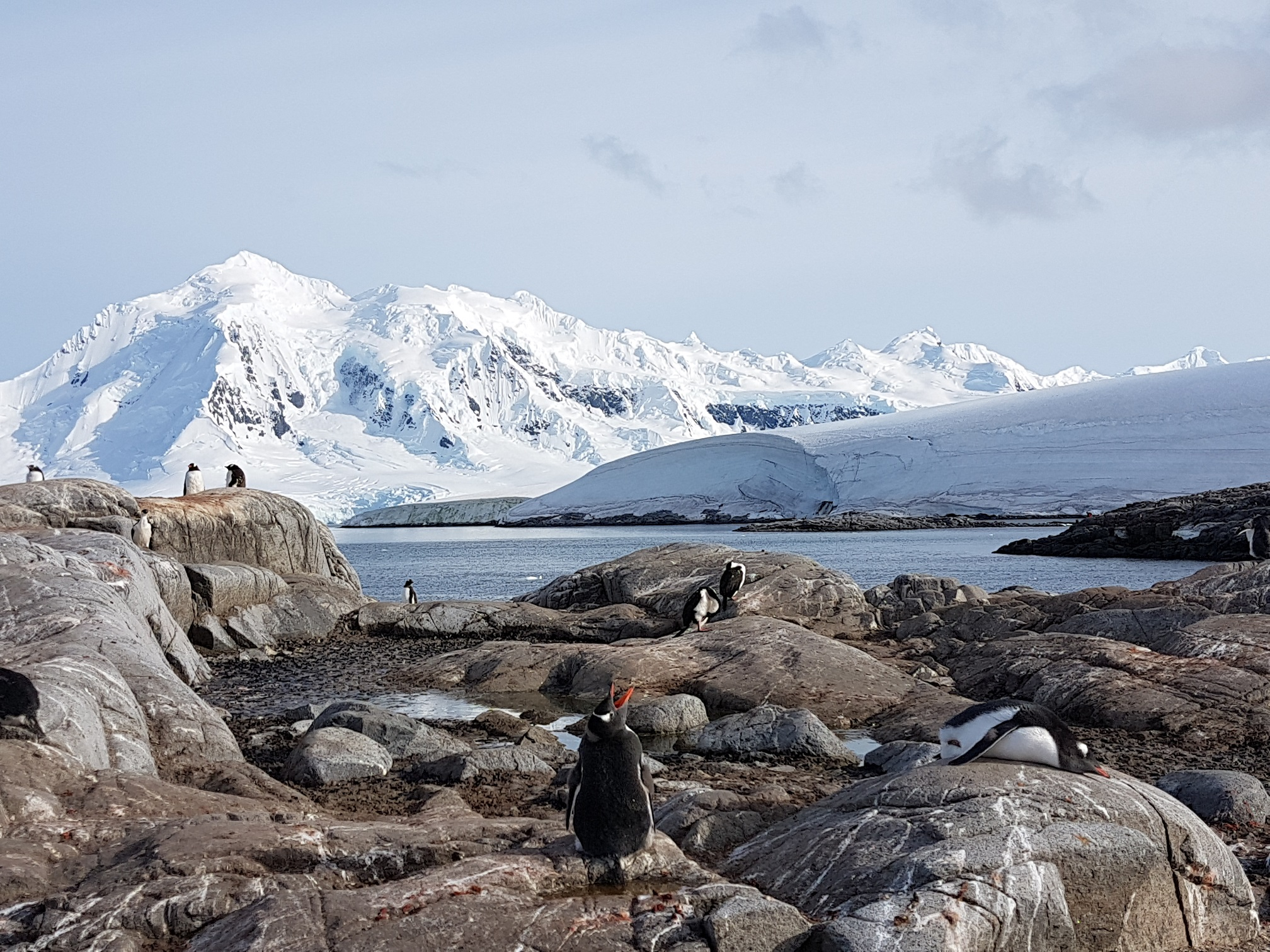 Penguins sitting on rocks with snow covered mountain in background