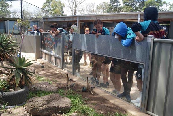 Students visiting meerkats at zoo