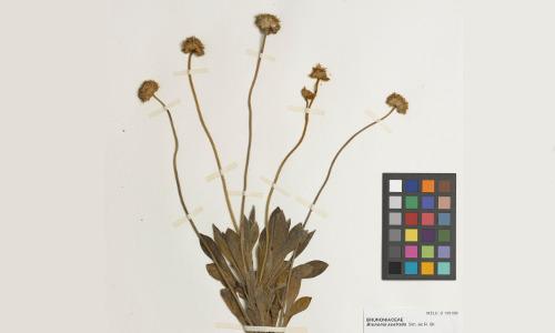 Wilsons Promontory Virtual Herbarium